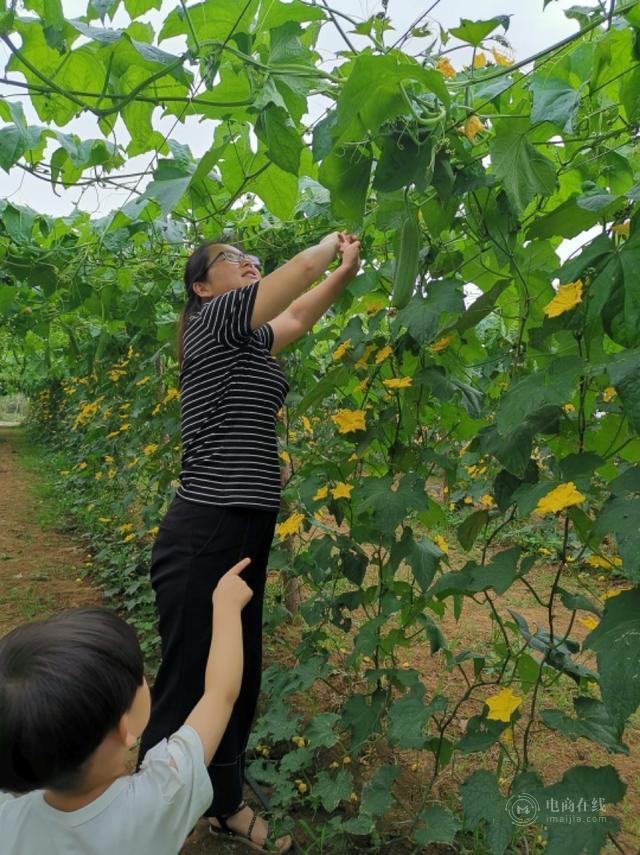 河南女白领怀孕辞职回农村:卖马蜂窝挖野菜,成全村赚钱最多的人